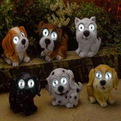 Smart Garden - Bright Eye Dogs