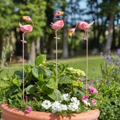 Smart Garden - Mingo's Loony Stakes