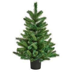 Premier - Noble Pine Tree