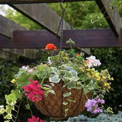 Tom Chambers - Decorative Hanging Basket