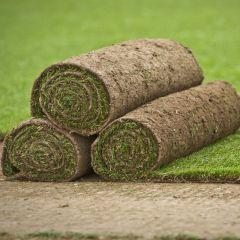 Cultivated Lawn Turf (per Sq.m)