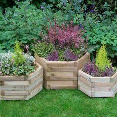 Forest - York Hexagonal Planter - Set of 3